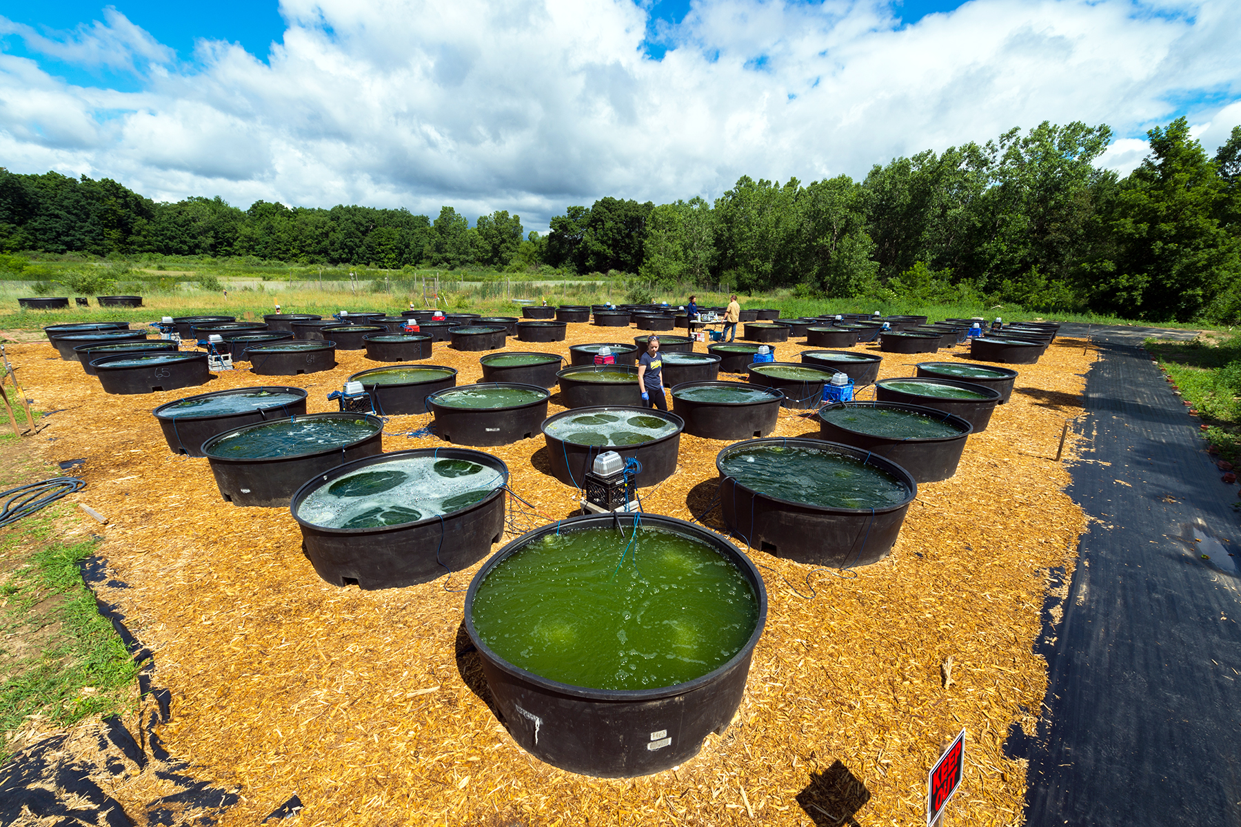 From ponds to power: $2M to perfect algae as diesel fuel. Alagal Species