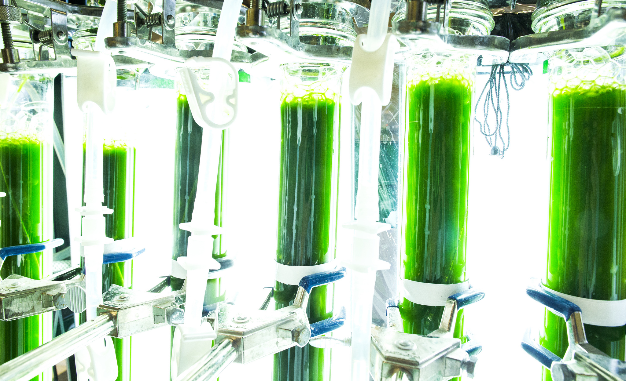 From ponds to power: $2M to perfect algae as a diesel fuel. Algae Lab.
