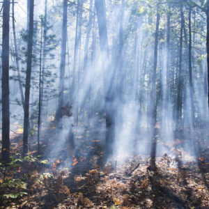 In addition to igniting fires in plots cleared of trees, fire crews also intentionally lit a ground fire in a stand of red pines. A mobile laboratory cruised nearby roads during the fire and analyzed the chemical composition of tiny smoke particles.