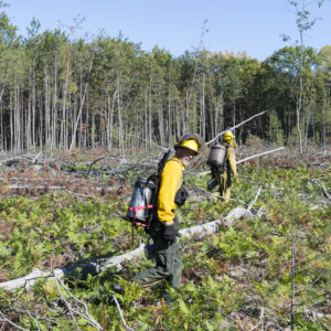 Trees larger than 5 inches in diameter were removed in April. Branches and other logging debris were left on the ground and then ignited during the October prescribed burn.