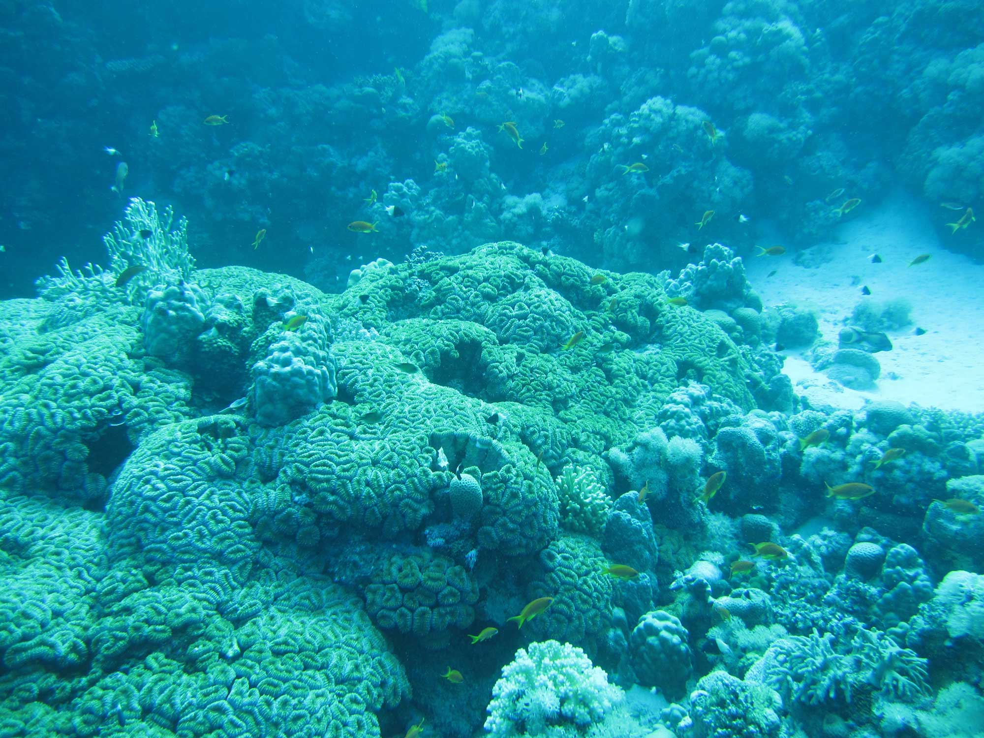 Coral reef at Cuba's Parque Nacional Peninsula de Guanahacabibes. Image credit: David Sherman
