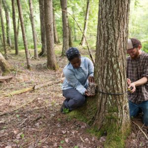 "Harris and Kuntze attach a ""camera trap"" to the base of a tree using a locking cable. The motion-triggered digital cameras capture snapshots of the state's diverse wildlife."
