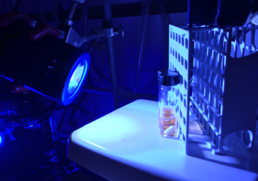 Photoredox Catalysis: The Stephenson lab uses blue LEDs to activate their photocatalysts. Image credit: The Stephenson Lab