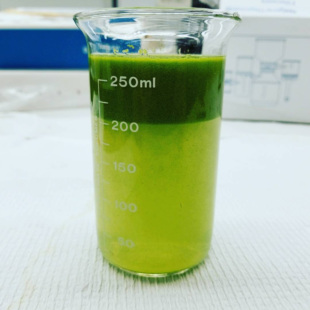 Beaker containing samples from the 2017 cyanobacteria bloom in western Lake Erie. Image credit: Christine Kitchens.