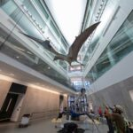 The Quetzalcoatlus northropi model is hoisted into place in an atrium at the U-M Biological Sciences Building, the new home of the university's Museum of Natural History. The 700-pound model was raised three stories into the air this week by fossil installation experts at Research Casting International of Toronto.