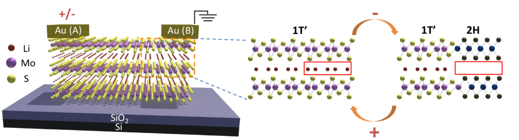 A schematic of the molybdenum disulfide layers with lithium ions between them. On the right, the simplified inset shows how the molybdenum disulfide changes its atom arrangements in the presence and absence of the lithium atoms, between a metal (1T' phase) and semiconductor (2H phase), respectively. Image credit: Xiaojian Zhu, Nanoelectronics Group, University of Michigan.