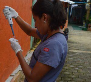 Ingrid Massiel Mercado, membro da equipe de estudo, processa uma amostra de sangue no bairro de Manágua, em junho de 2017, como parte do Estudo de Coorte de Dengue Pediátrica da Nicarágua (PDCS), estabelecido em 2004. Crédito da imagem: Instituto de Ciências Sustentáveis, Paolo Harris Paz.