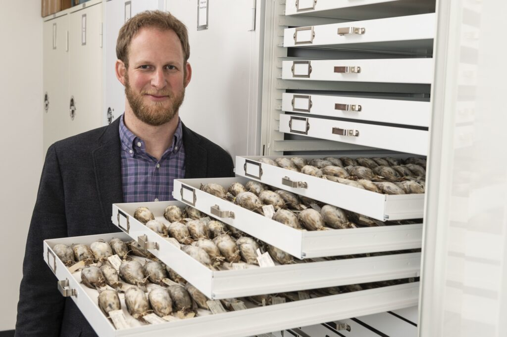 University of Michigan evolutionary biologist Benjamin Winger with some of the migratory songbirds used in a large study of nighttime building collisions in the Midwest. Image credit: Roger Hart/University of Michigan Photography