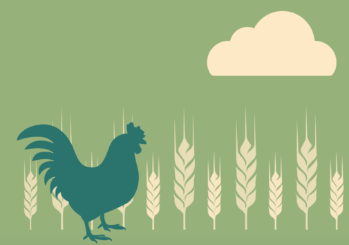 Illustration of a chicken with wheat crops.