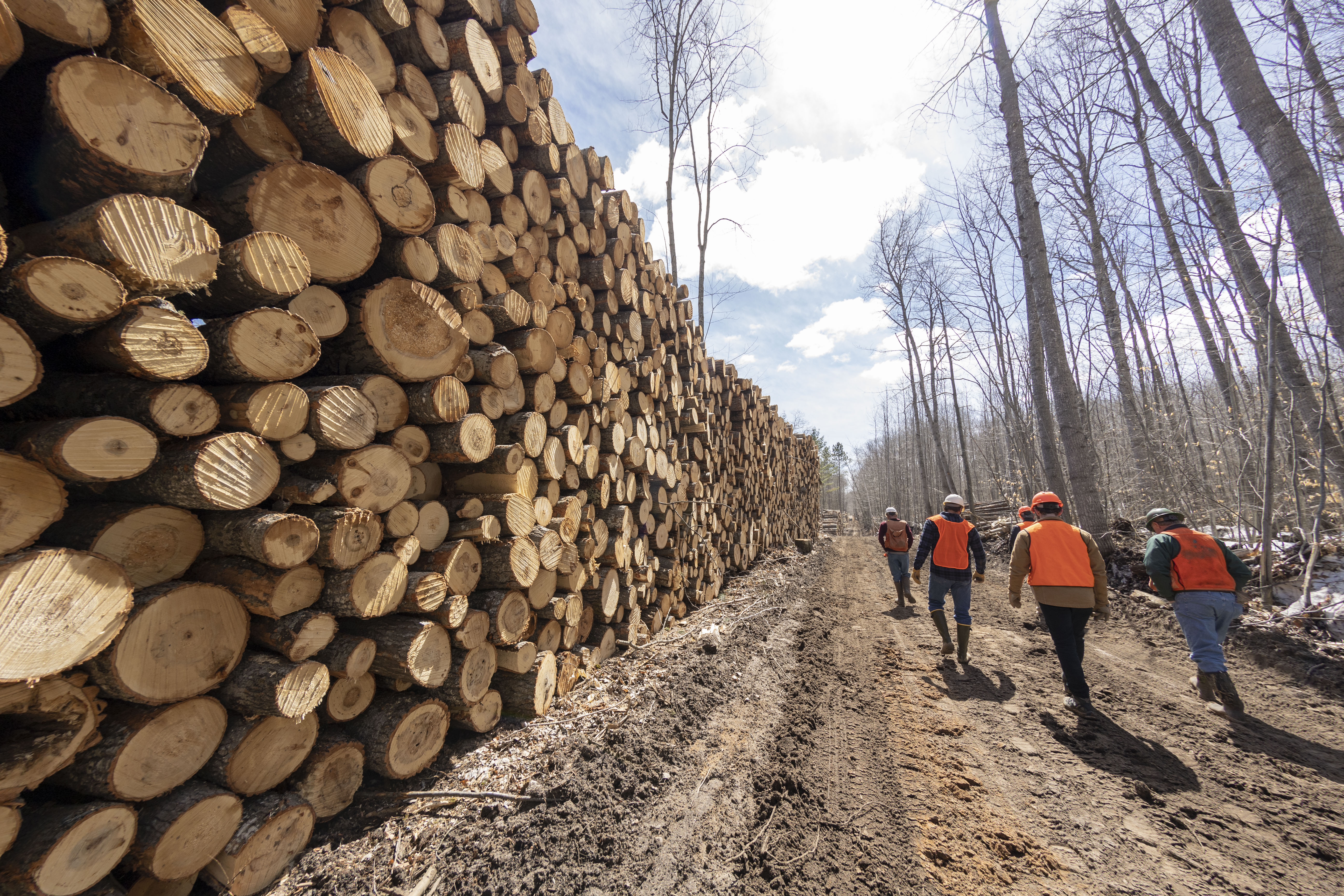 U-M researchers and their colleagues walk past a stack of bigtooth aspen logs cut as part of the UMBS Adaptive Aspen Management Experiment at the U-M Biological Station, near the northern tip of Michigan's Lower Peninsula. Image credit: Roger Hart, University of Michigan Photography