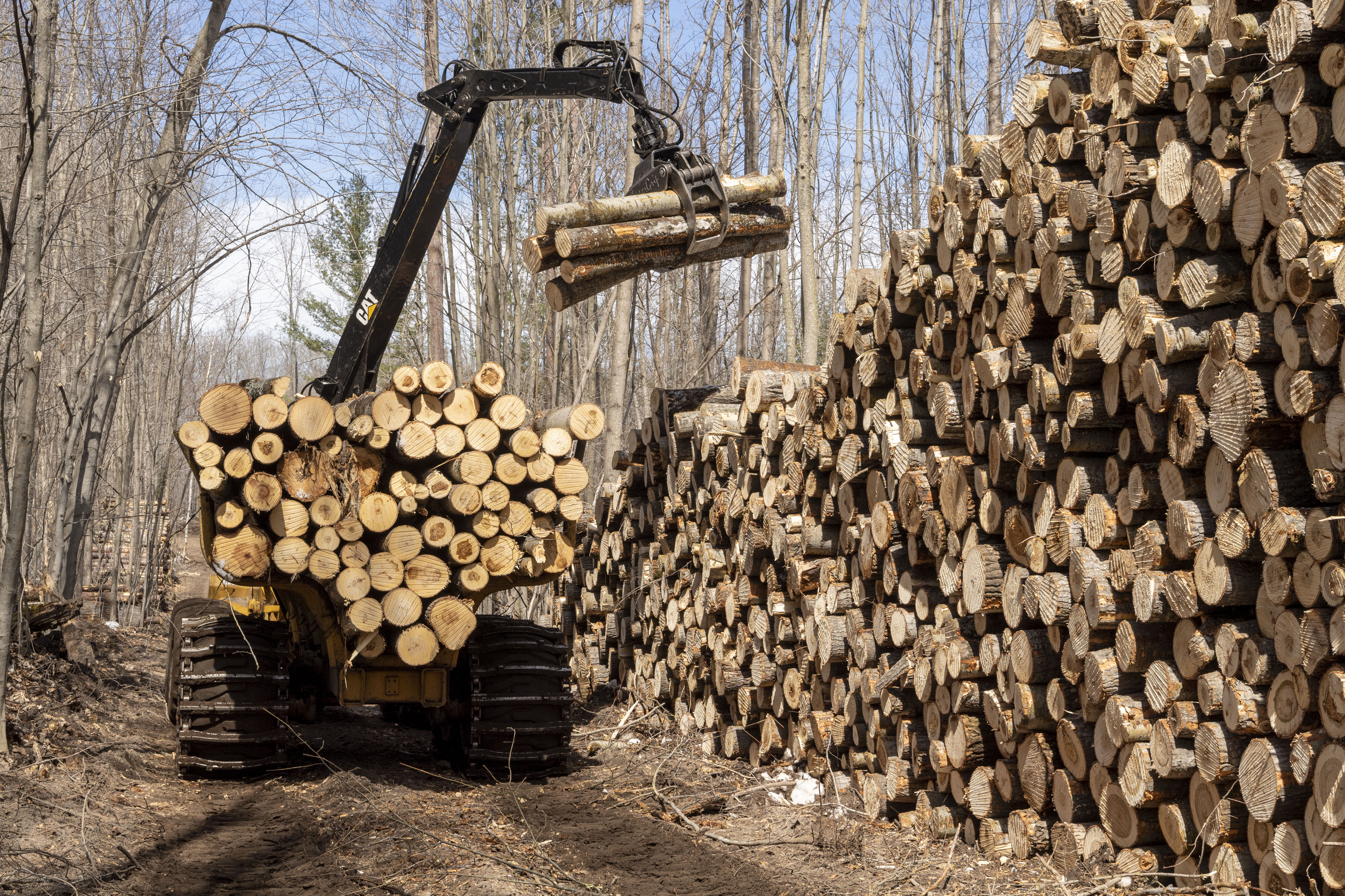 A machine called a forwarder stacks bigtooth aspen logs at the site of the UMBS Adaptive Aspen Management Experiment, at the U-M Biological Station near Pellston, Michigan. Photo by Roger Hart, University of Michigan Photography.