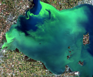 Western Lake Erie and an algae bloom as seen from a Landsat-8 satellite in September 2017. Image credit: NASA/USGS