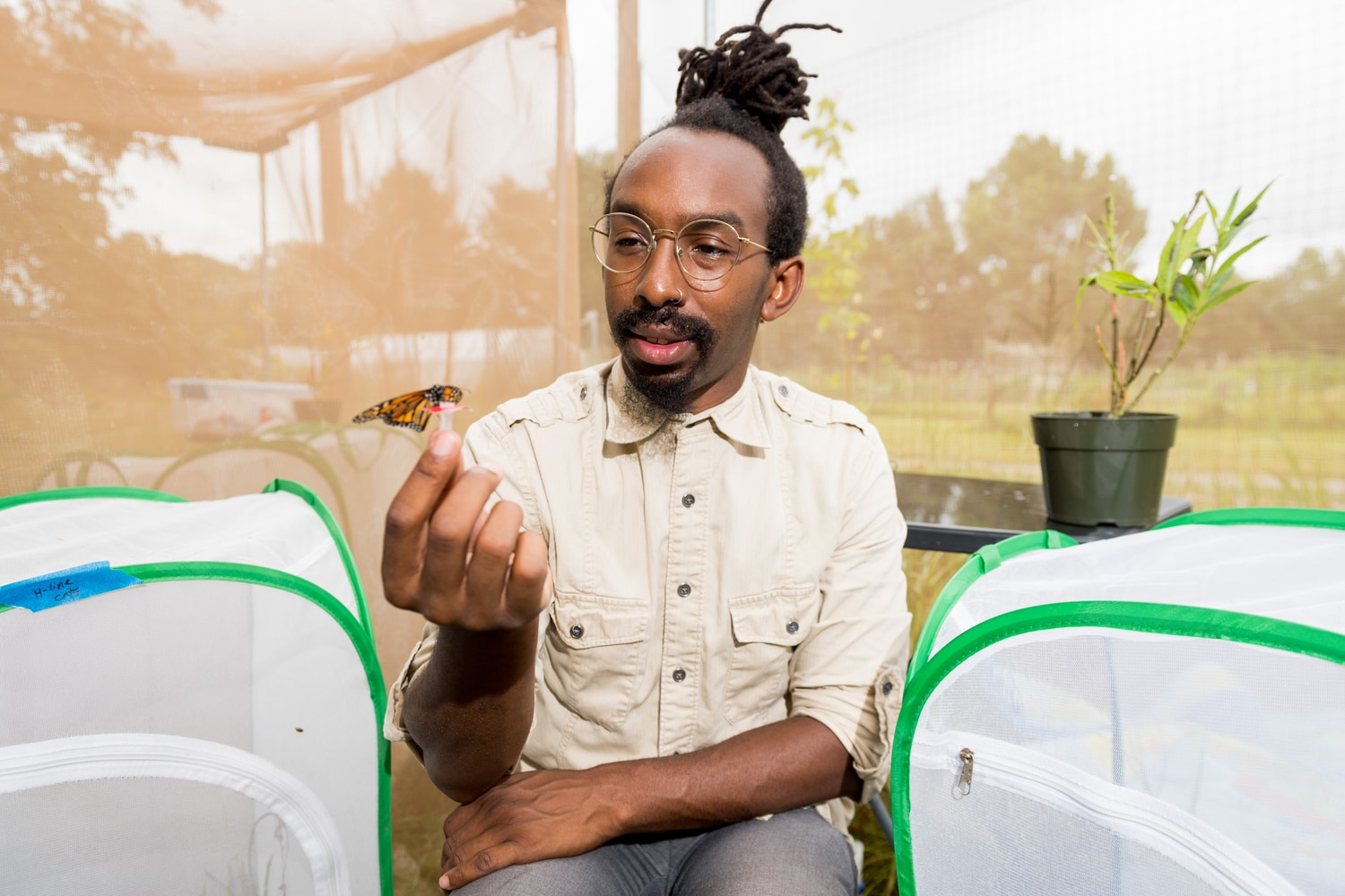 U-M biologist D. André Green holds a monarch butterfly in an outdoor insectary at the university's Matthaei Botanical Gardens. Green studies monarch migration and the internal timer that tells the butterflies it's time to wake from winter dormancy and prepare for their springtime journey northward. Image credit: Daryl Marshke, Michigan Photography