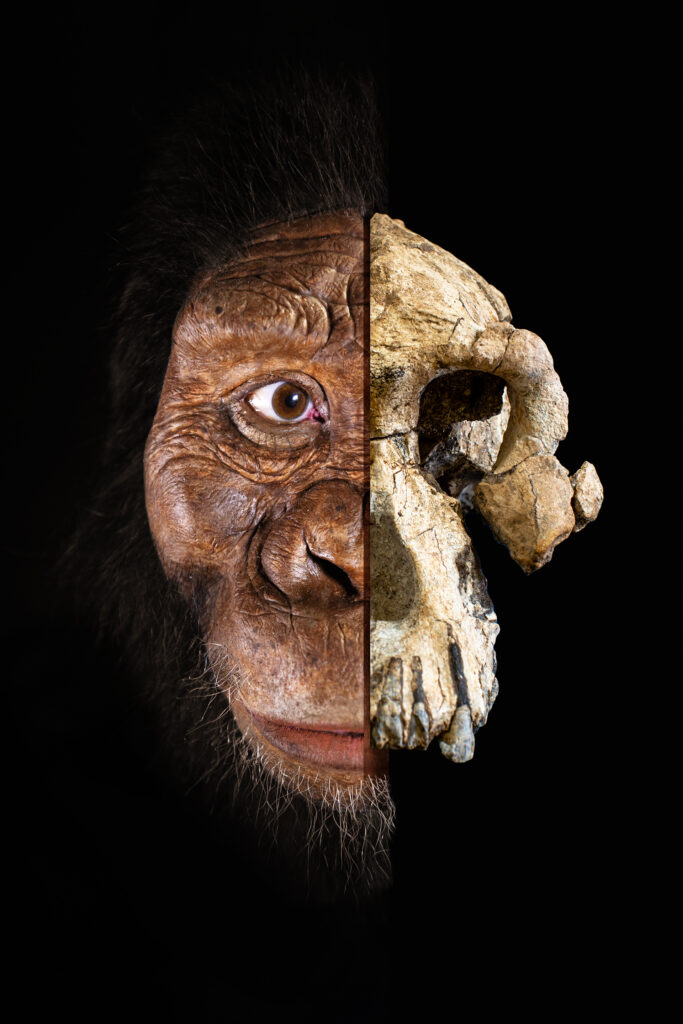 MRD photomontage by Jennifer Taylor, courtesy of the Cleveland Museum of Natural History. Photography by Matt Crow and Dale Omori. Facial reconstruction by John Gurche made possible through generous contribution by Susan and George Klein