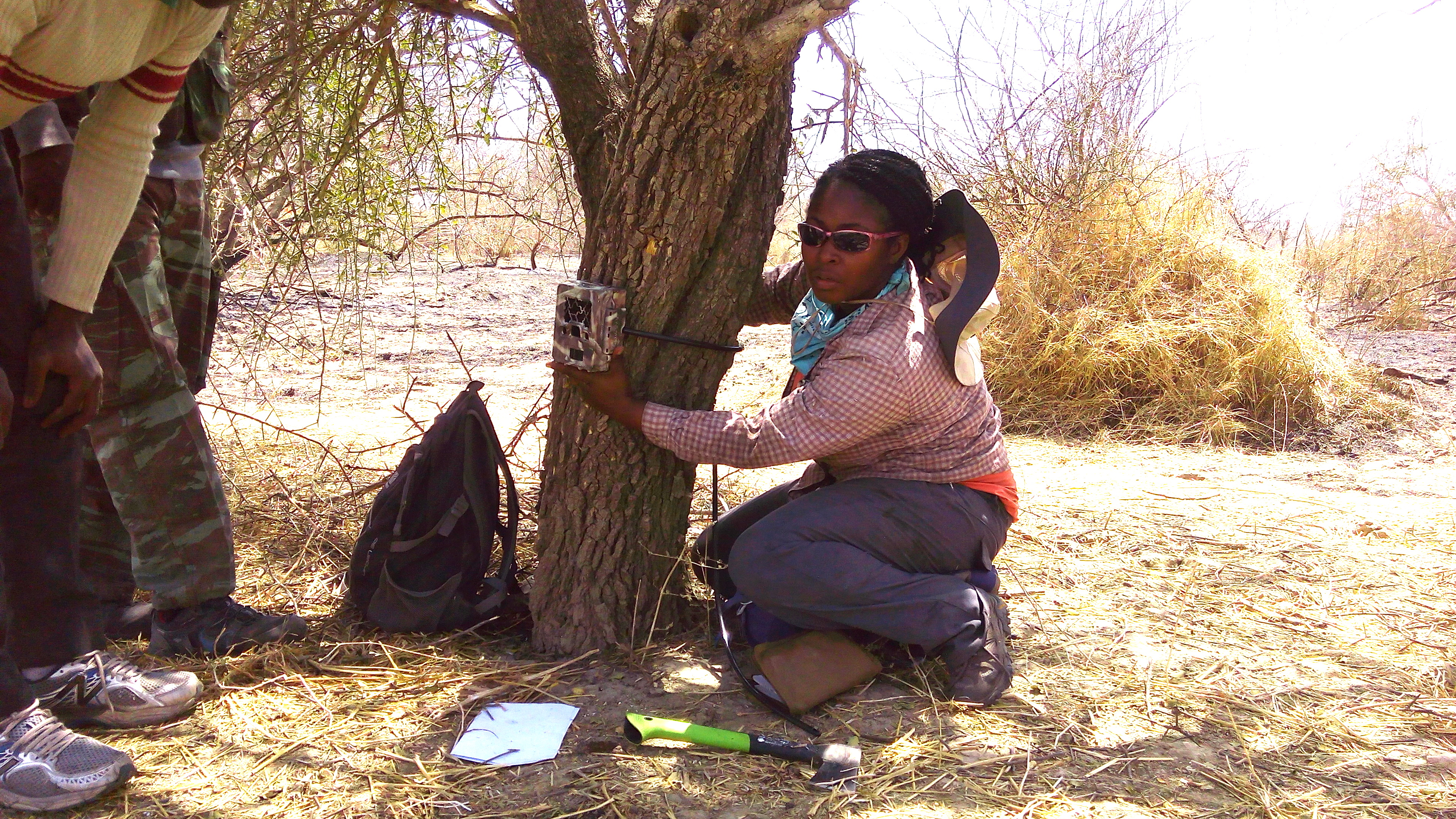 University of Michigan wildlife ecologist Nyeema Harris and her crew attach a digital camera to a tree for a study of human pressures on wildlife within the largest protected area in West Africa. Image credit: University of Michigan Applied Wildlife Ecology Lab.