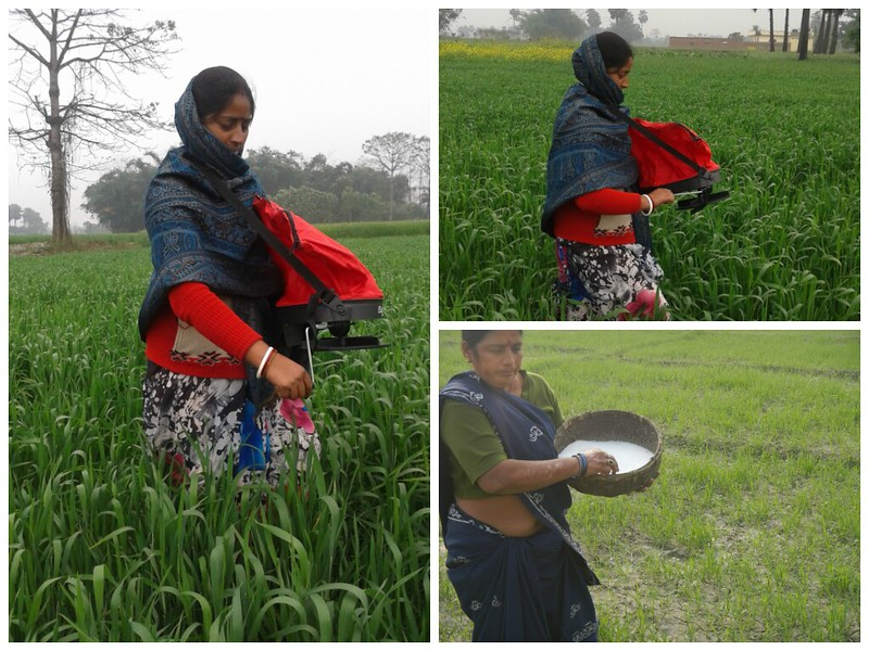 Women applying fertilizer via traditional method. Image courtesy: CIMMYT