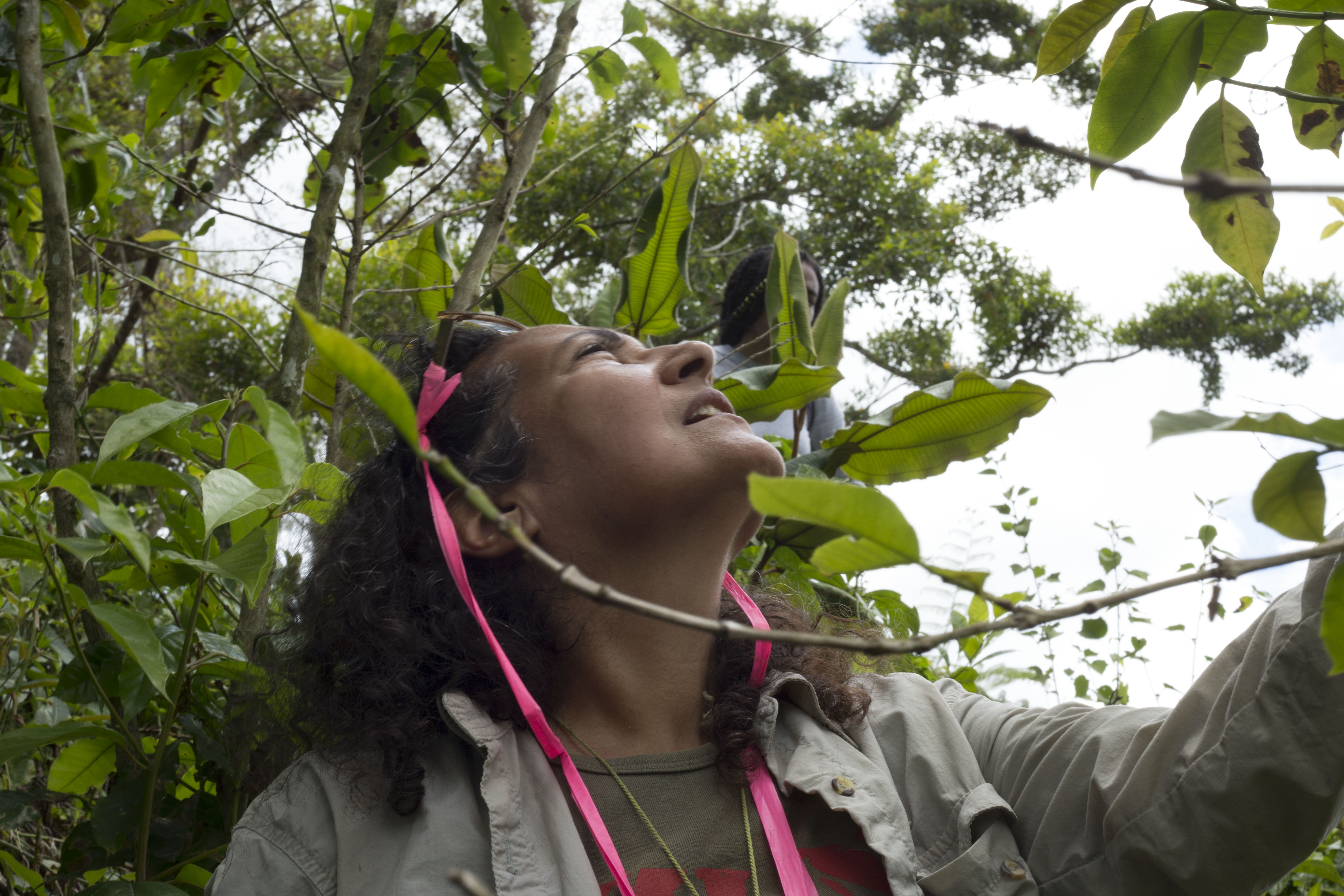 In July 2018, University of Michigan ecologist Ivette Perfecto looks at Hurricane Maria damage sustained at a coffee farm in Utuado, Puerto Rico. Image credit: Levi Stroud, U-M College of LSA