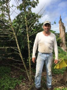 Puerto Rican coffee farmer Raul Toledo standing next to a coffee tree stripped of its leaves by Hurricane Maria winds. The trunk of the large tree behind Toledo snapped during the storm. Image credit: Ivette Perfecto