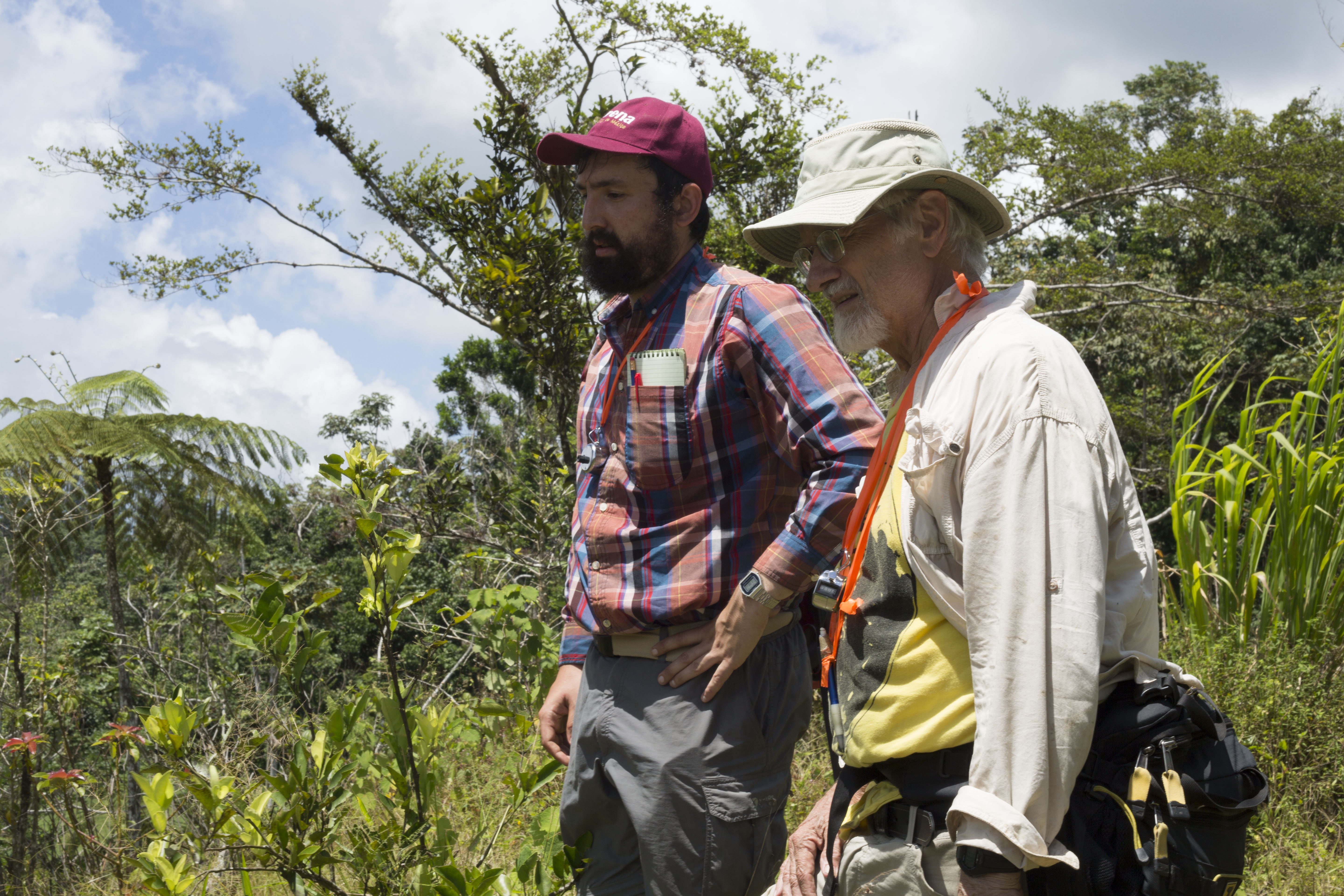In July 2018, U-M doctoral student Zachary Hajian-Forooshani and U-M ecologist John Vandermeer survey a Puerto Rican coffee farm damaged less than a year earlier by Hurricane Maria. Image credit: Levi Stroud, U-M College of LSA