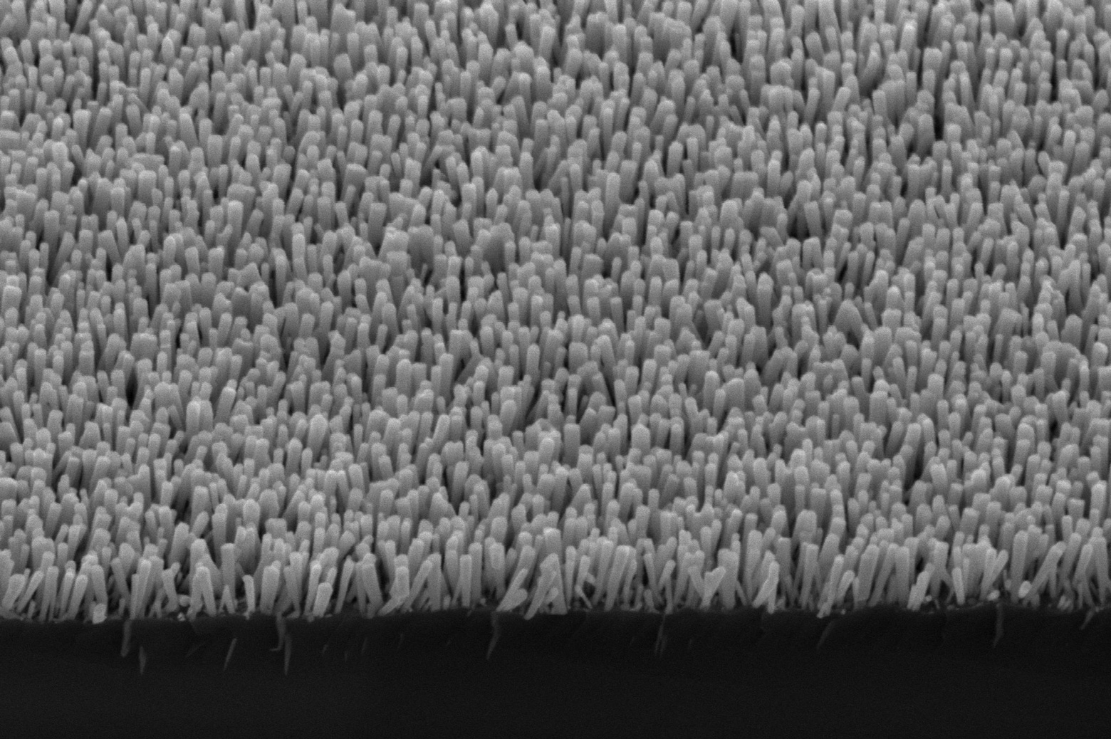 An electron microscope image shows the semiconductor nanowires. These deliver electrons to metal nanoparticles, which turn carbon dioxide and water into methane. Image credit: Baowen Zhou