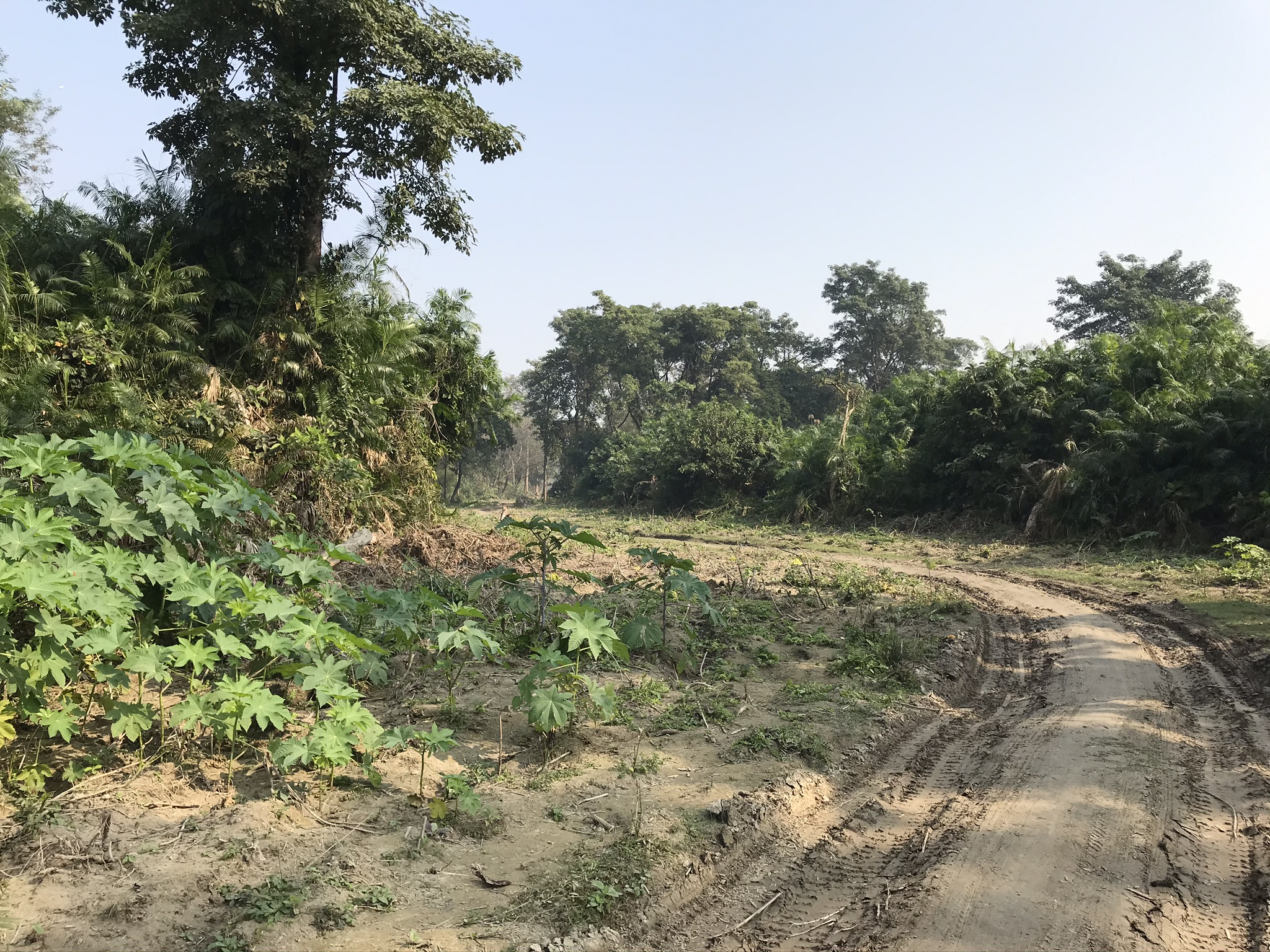 A path being cleared for a new road in tiger habitat in Nepal. Image credit: Neil Carter