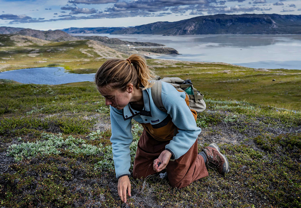 Abby takes a short break from exploring the Sondre stromFjord near Kangerlussuaq, Greenland to forage for a handful of Arctic Blueberries. Image credit: Sean Patrick
