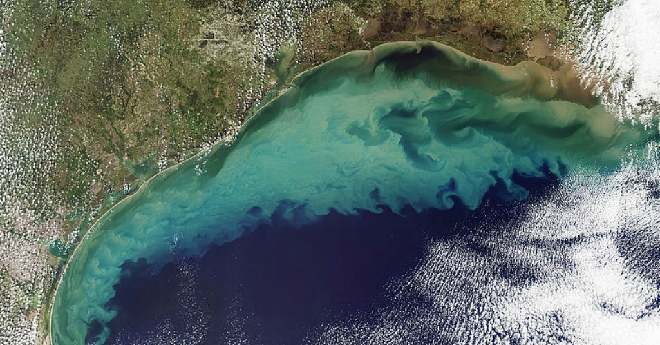 """The blue-green area represents a """"dead zone"""" of oxygen-depleted water. Resulting from nitrogen and phosphorus pollution in the Mississippi River. Image credit: NASA/Getty Images"""