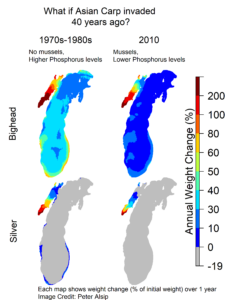The four maps show how levels of the nutrient phosphorus and the presence or absence of quagga mussels in Lake Michigan affect annual weight change for bighead and silver carp. The maps compare conditions in the lake in the 1970s and 1980s -- when quagga mussels had yet to establish and before efforts to reduce levels of the nutrient phosphorus were implemented and thus were much higher than they are today -- to 2010 conditions. Image credit: Peter Alsip. From Alsip et al. in Biological Invasions, July 2020, https://doi.org/10.1007/s10530-020-02296-4.