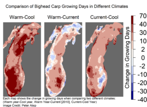 Each map shows simulated changes in the number of bighead carp growing days in Lake Michigan when comparing two different climates. The map on the left compares a warm year (1998, which had water temperatures within the range of values expected in the period 2030-2090, according to climate models) to a cool year (1997, a year with a colder than average winter-spring period, was used in the simulations). The middle map compares a simulated warm year to current Lake Michigan conditions (for the purposes of this study, the year 2010 represents current conditions). The map on the right compares current conditions to a cool year. Image credit: Peter Alsip. From Alsip et al. in Biological Invasions, July 2020, https://doi.org/10.1007/s10530-020-02296-4.