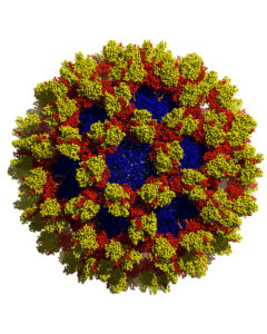 """Nasty Noro"" BioArtography image. Digital depiction of the Noroviruses."
