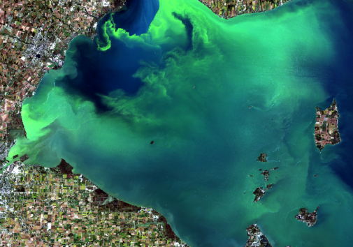 Western Lake Erie and an algae bloom as seen from a Landsat-8 satellite in September 2017. Image credit: NASA/USGS