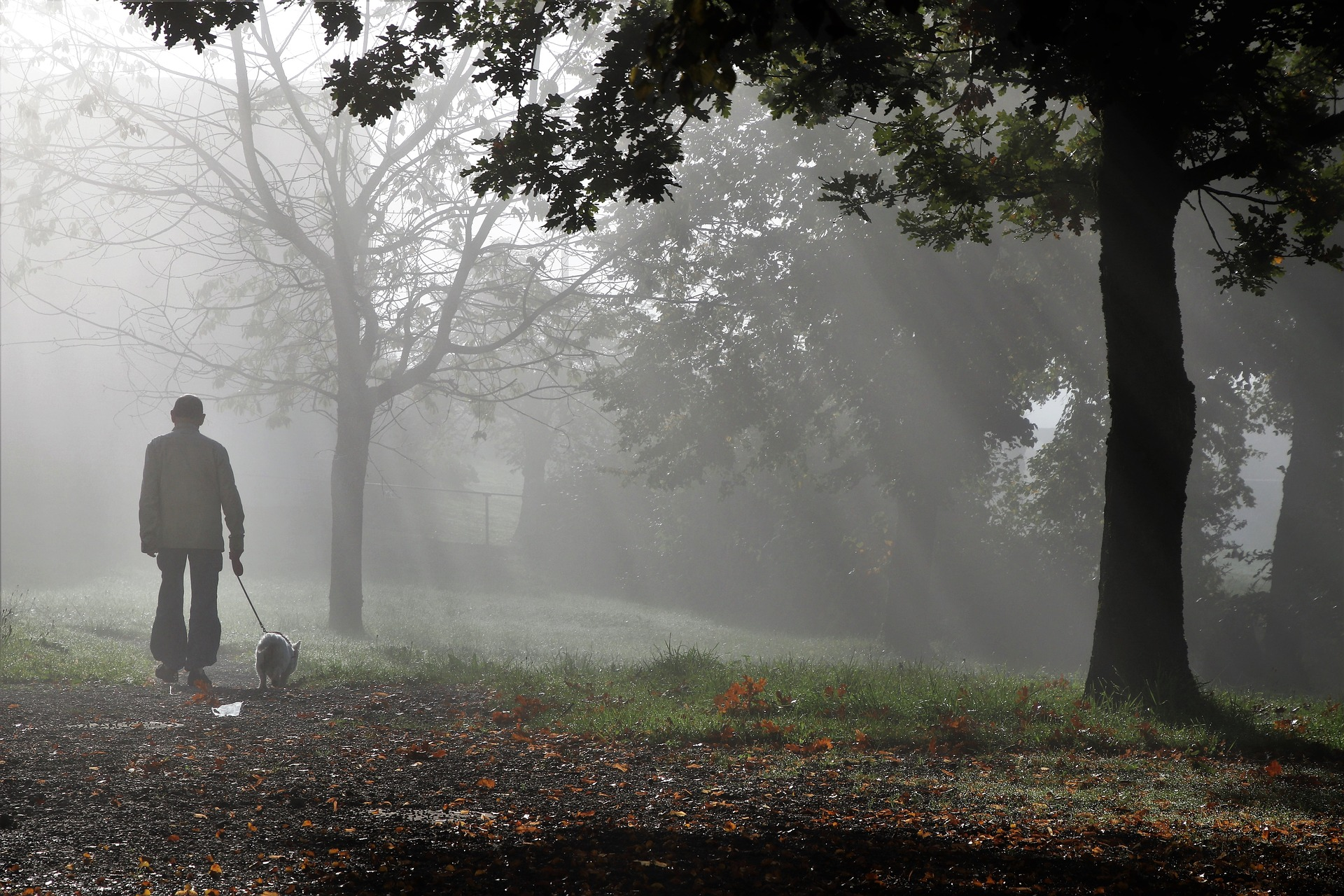 An older person walking a dog in a foggy park. Image courtesy: pasja1000 via Pixabay