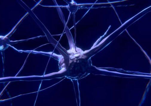 Brain neurons. Image credit: CC0 Public Domain