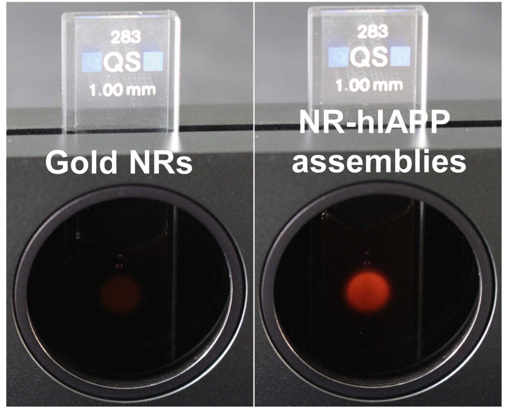 In the device on the left, gold nanorods permit a small amount of light through the two crossed-polarizers. This is akin to the signal showing that a drug designed to prevent amyloid plaques from forming is working. However, when the amyloid proteins assemble the gold nanorods into helices, a clear red light is visible through the polarizers, revealing that a drug has failed. Credit: Jun Lu, Jilin University and University of Michigan.