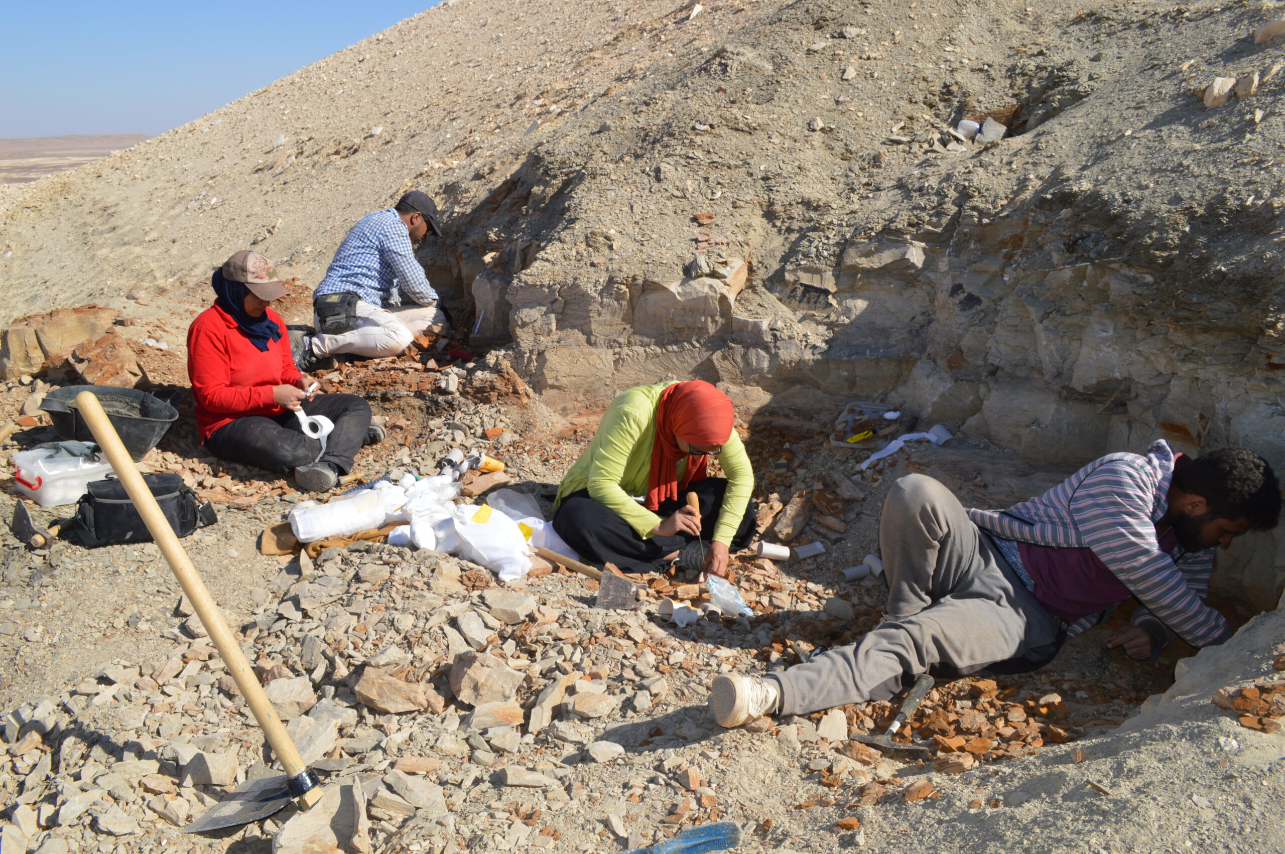 team of paleontologists excavates fish-bearing rock layers in Egypt