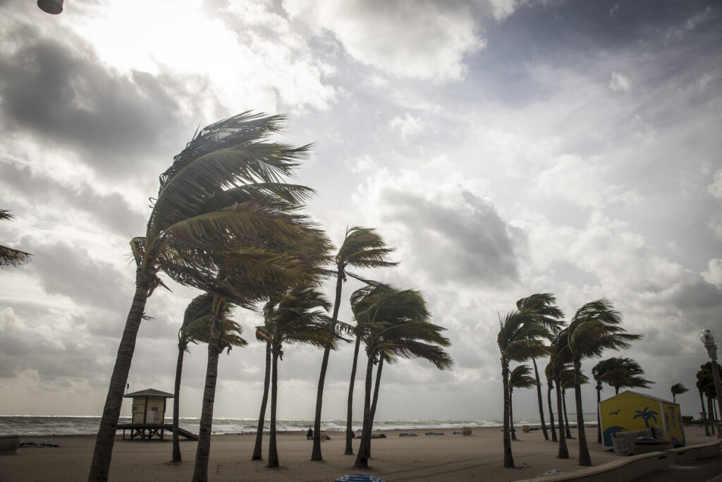 Palm trees blowing before a hurricane. Image credit: iStock