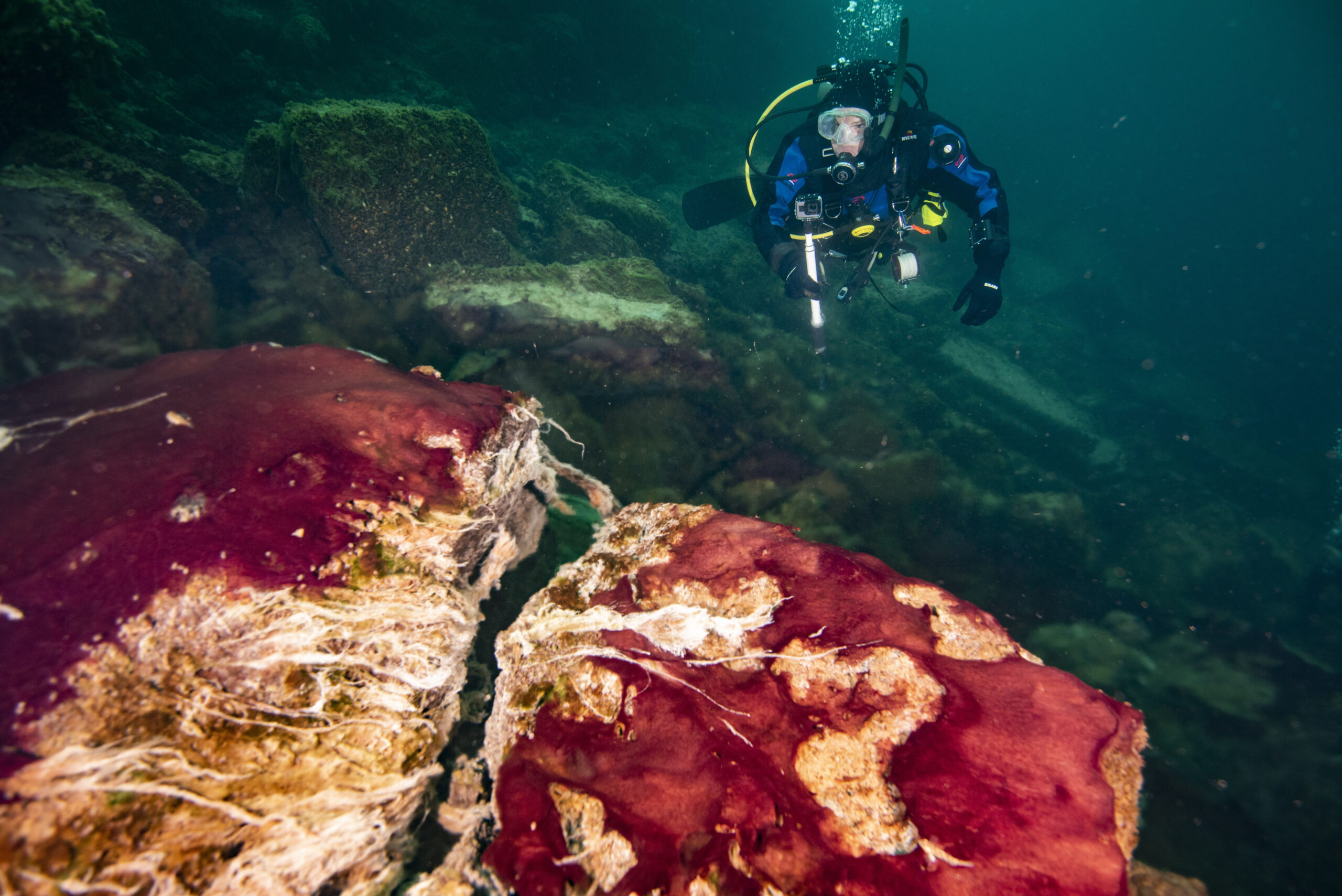 A scuba diver observes the purple, white and green microbes covering rocks in Lake Huron's Middle Island Sinkhole. Photo credit: Phil Hartmeyer, NOAA Thunder Bay National Marine Sanctuary.