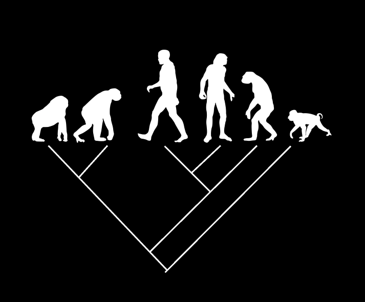 Diagram reflecting the non-linear evolution of groups of organisms. Image credit: Prosanta Chakrabarty/Shutterstock