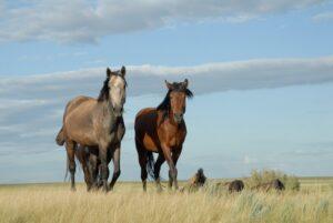 Horses roam the Eurasian steppe. Image credit: A. Senokosov