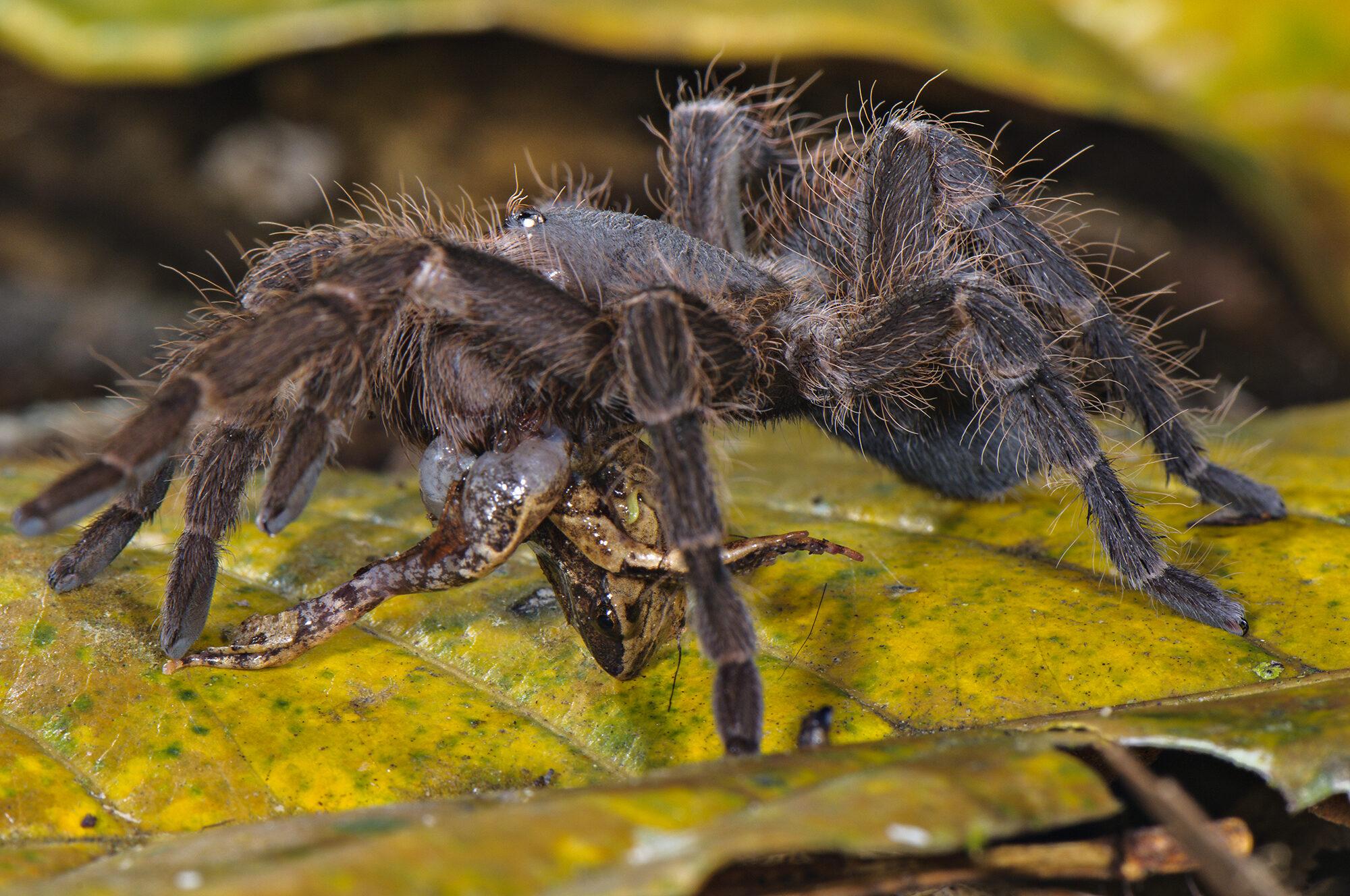U-M biologists capture super-creepy photos of Amazon spiders