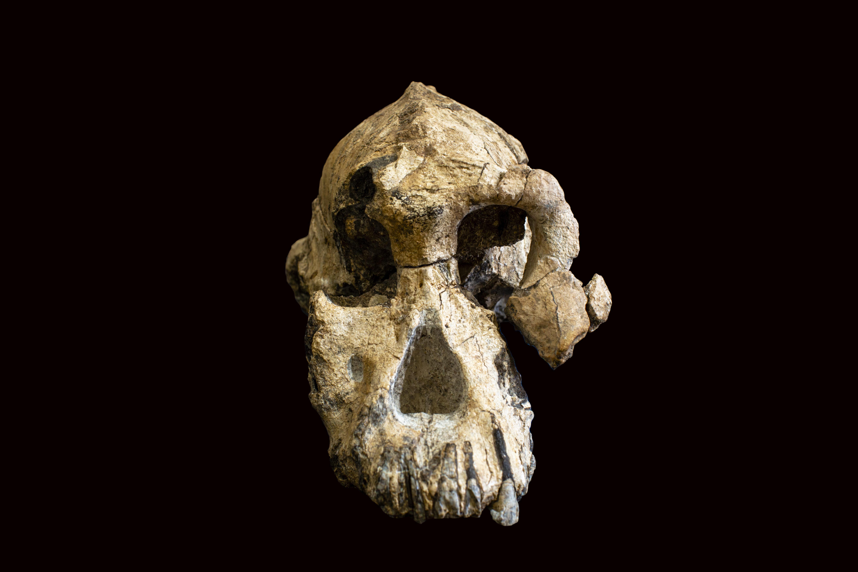 A 3 8-million-year-old fossil from Ethiopia's Afar region