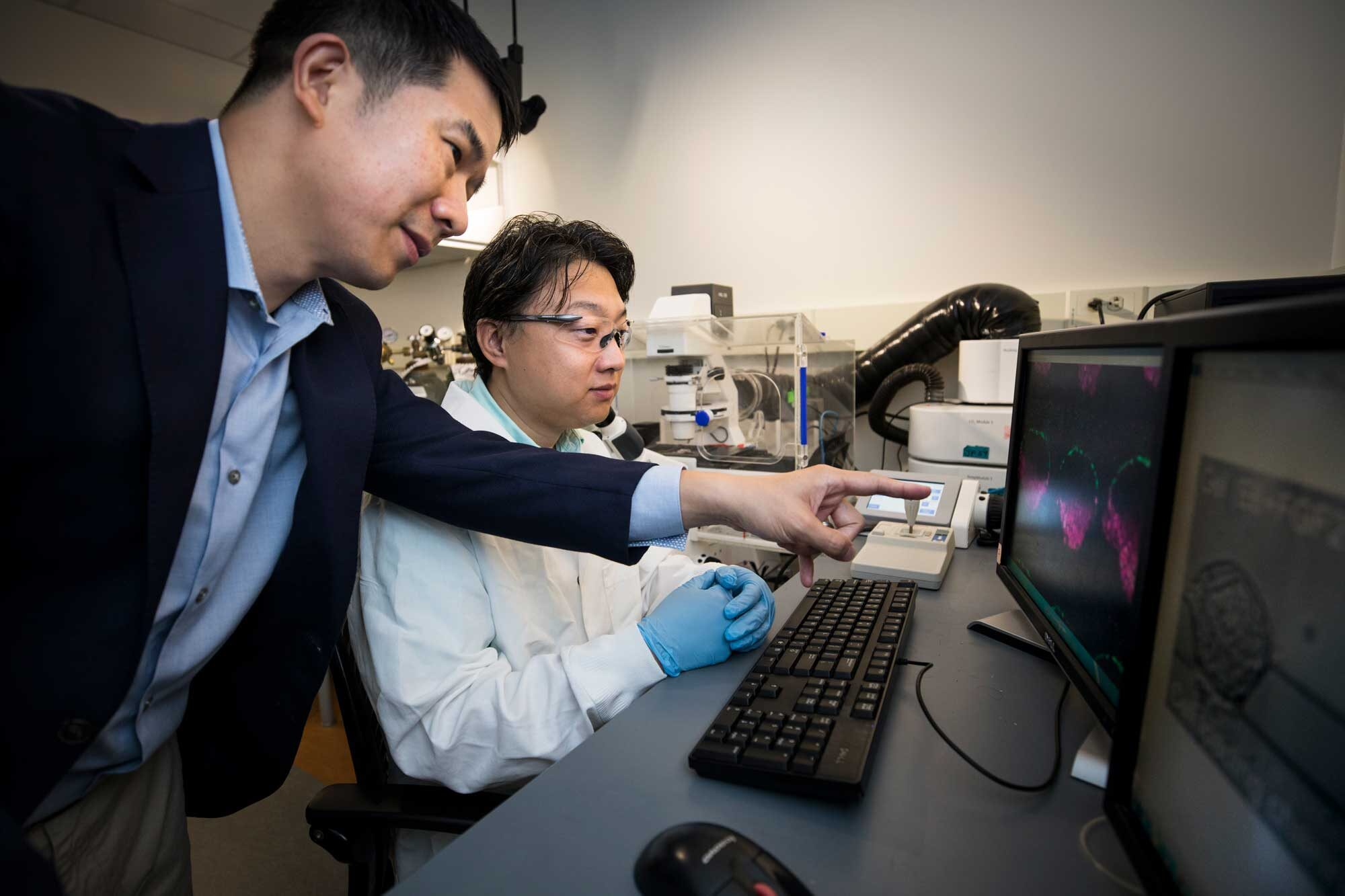 Breakthrough stem cell platform could shed light on mysteries of early human development